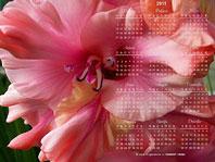 заставки-гладиолусы календарь 2011 года 1280х960