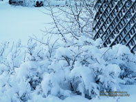 Зимние сумерки - 1024 x 768