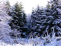 Зимний лес - 1024 х 768