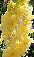 гладиолус Золотая Роскошь